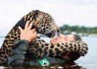 Возле тонущего ягуара вдруг оказался человек