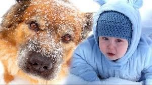 Что сделал пес для спасения малыша